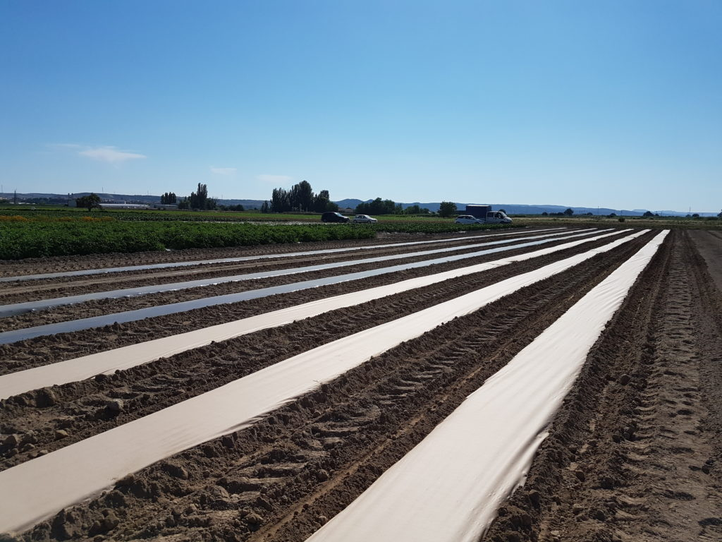 Alternativas sostenibles al plástico en acolchado agrícola.
